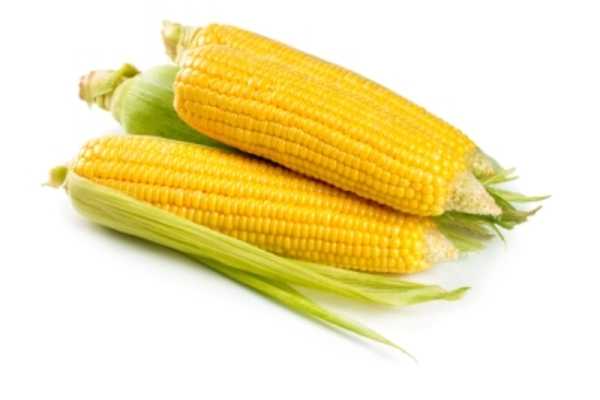 Order your PolyNPlus™ Maize now to aid late summer cob fill