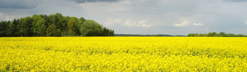 Oilseed Rape Fertilisers